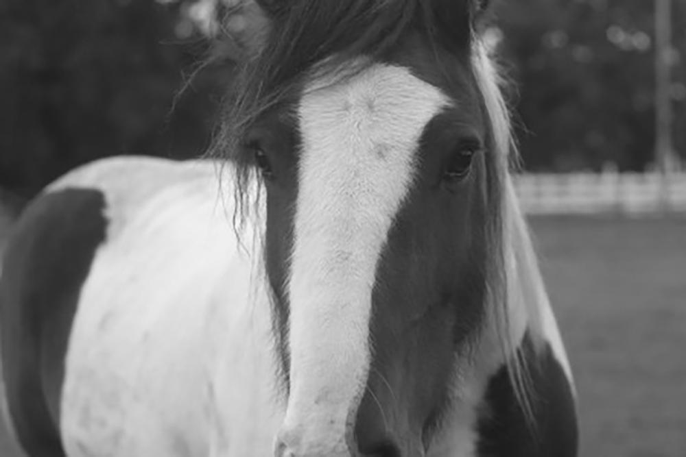 paarden coaching assertiviteit zelfvertrouwen